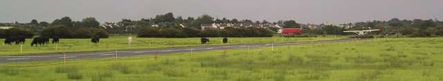 Landing amongst the cows at Coonagh airfield